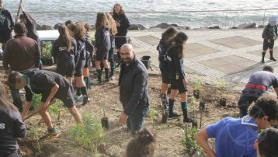 Trees for the World: Machico Ambiente