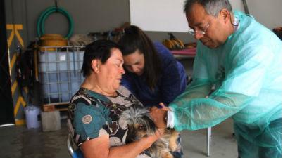 Vacinação antirrábica em Machico: primeira fase realiazada.